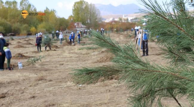 Bitlis'te Yüzlerce Fidan Toprakla Buluştu