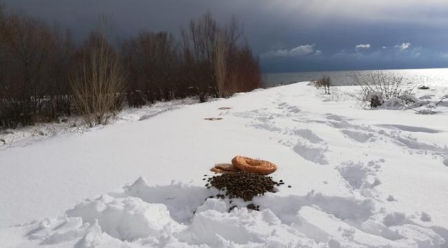 Adilcevaz'da Sokak Hayvanları İçin Doğaya Yiyecek Bırakıldı