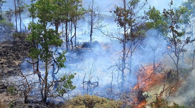 Nemrut'ta Çıkan Yangın Kontrol Altına Alındı