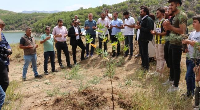 Tatvan Belediyesi, Orman Yangınlarında Hayatını Kaybedenler İçin Fidan Dikti